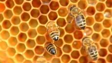 פרופוליס דבורים