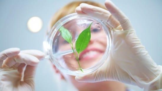 צמחי מרפא או תרופות