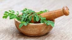 צמח מורינגה