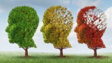 תזונה למוח