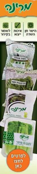 Marina_lettuce