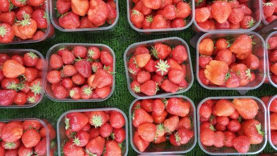 תותים. גם בהם מסתתר יוד שעלול להחמיר מצב של תת פעילות בלוטת התריס מסוג האשימוטו