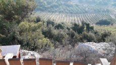 סיור חוויתי אודות צמחי בר למאכל צמחי מרפא ותבלין מהעת העתיקה. חוות הנמורה - חוות בודדים בהר מירון. א אדר 15.2.18