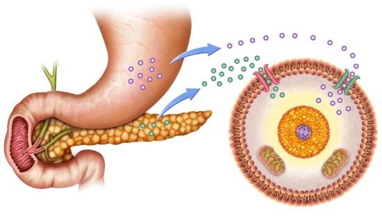 טיפול טבעי בסוכרת באמצעות אסכרקס - יעילות הטיפול עולה בכלל המדדים הקליניים והמעבדתיים במידה משמעותית