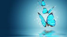 פרפרים מעופפים