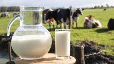מוצרי חלב מקור לויטמין B12