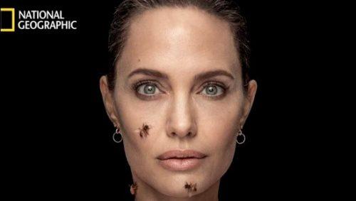 אנג'לינה ג'ולי עם הדבורים. צילום באדיבות מגזין נשיונל ג'יאוגרפיק