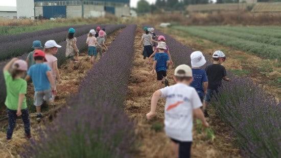 ילדים בשדות הלבנדר. צילום: נוביקס