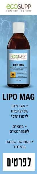LipoMag_Migdal