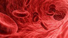 הדמיה של כלי דם בגופנו. צילום: pixabay