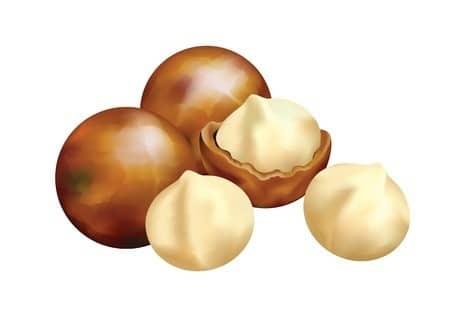 אגוזי מקדמיה (123RF)