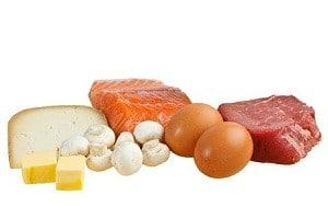 חלבונים ושומנים מהחי