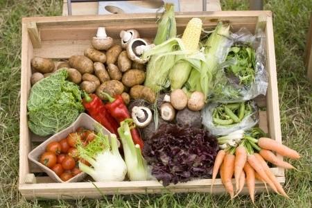 ירקות מזינים (123RF)