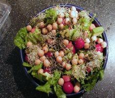 רק תזונה הקרובה לטבעונות תציל אותנו. צילום: moria-cc-by